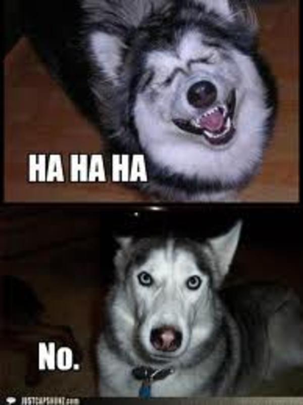 dont-make-laugh-no-memes.jpg